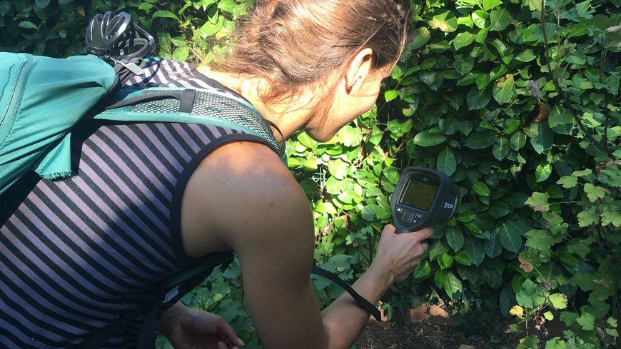 Cindy, membre de la Ligue pour la protection des oiseaux de la Drôme, en train de chercher à l'aide d'une caméra thermique, un hérisson muni d'une balise GPS.