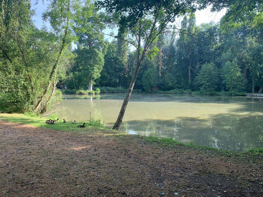 Un étang à Saint-Arnoult