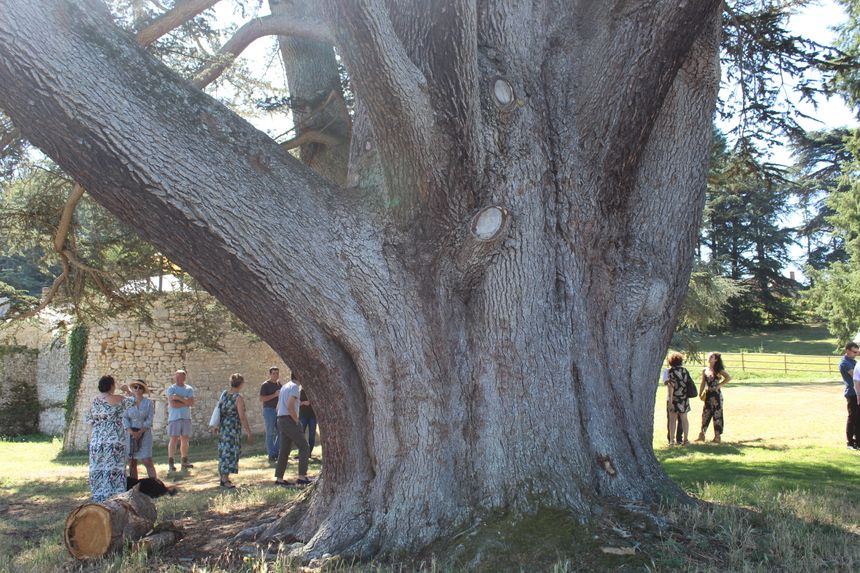 Il faut être huit à se donner la main pour faire le tour de l'arbre