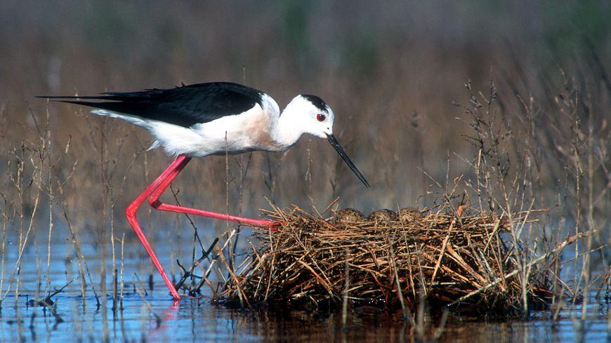 88 espèces nichent ou ont déjà niché sur les 110 hectares de la réserve