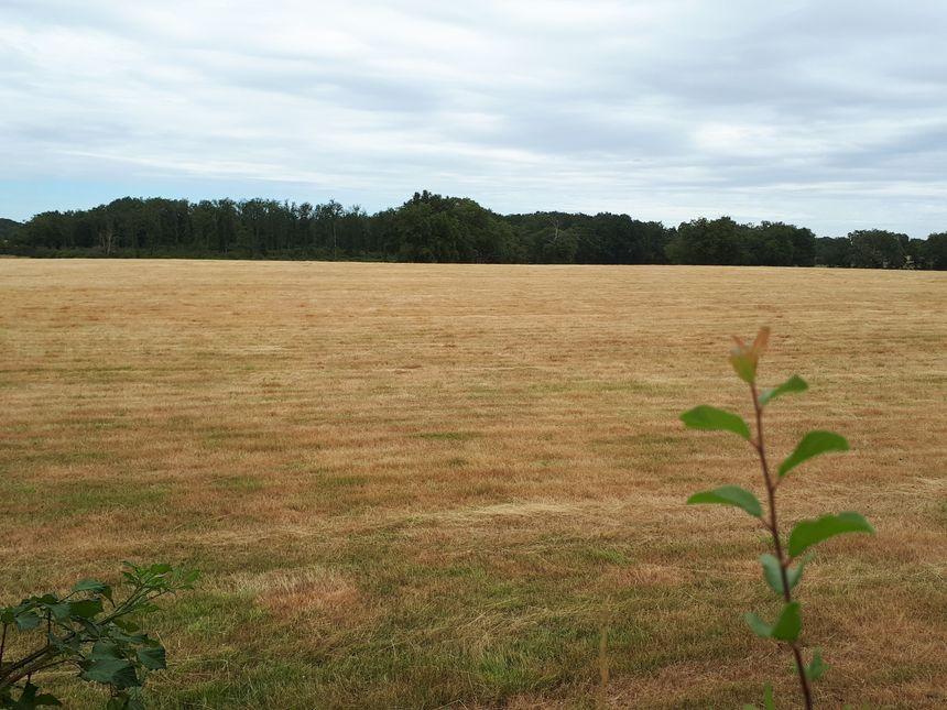 Prairie aux abords de l'étang des Landes