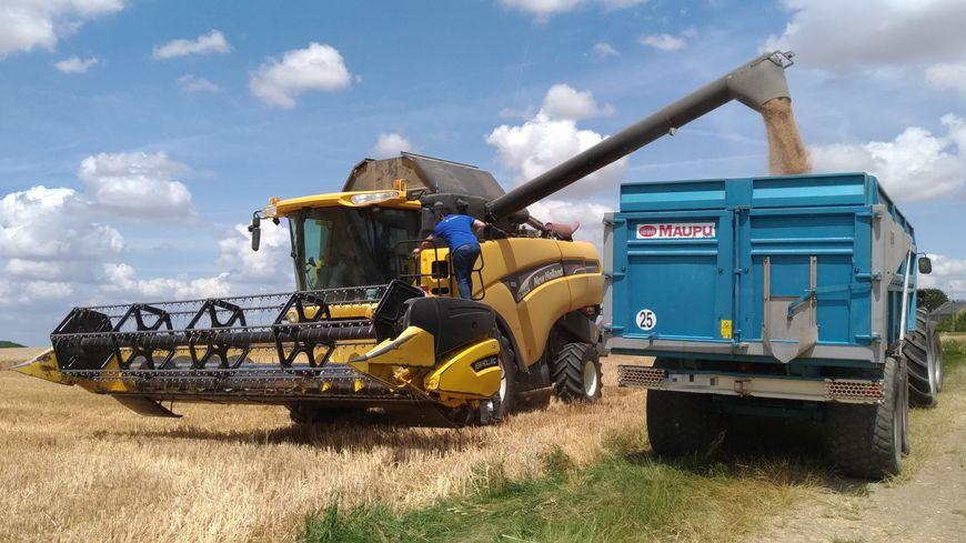 Après avoir été moissonné, le blé est stocké dans un silo, en attendant d'être vendu.