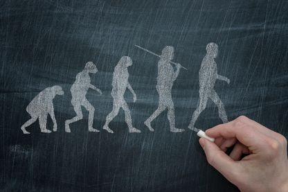 La grande famille des hominidés, évolution