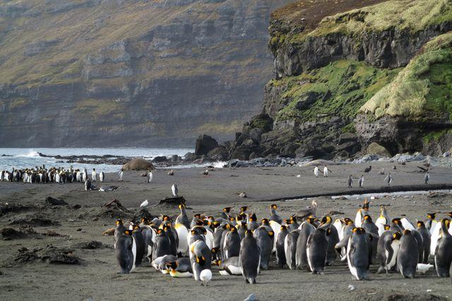 Les îles et terres australes françaises abritent des millions d'oiseaux et de mammifères marins