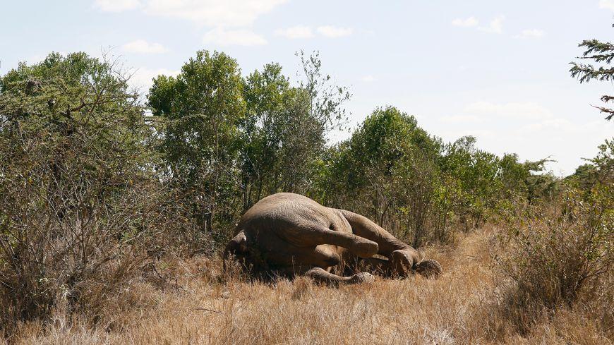 Safaris-chasse (image d'illustration)