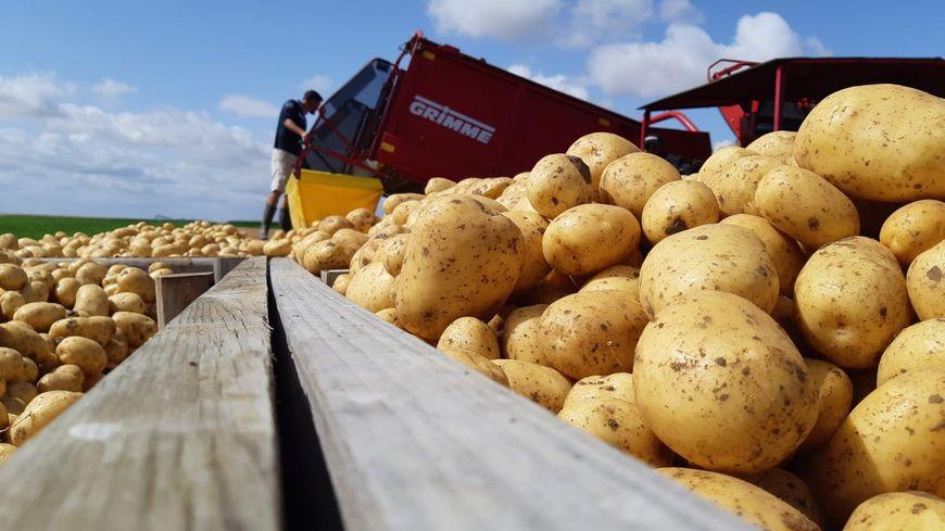 Récolte des pommes de terre à Faronville, le 30 juillet 2019