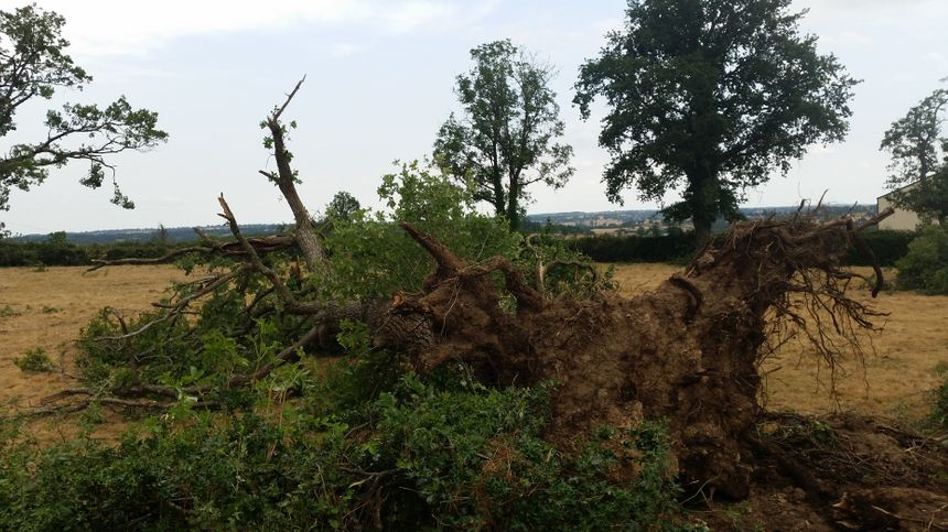 Un arbre arraché