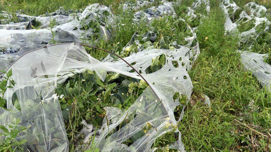 Les agriculteurs touchés par la grêle cet été (illustration)