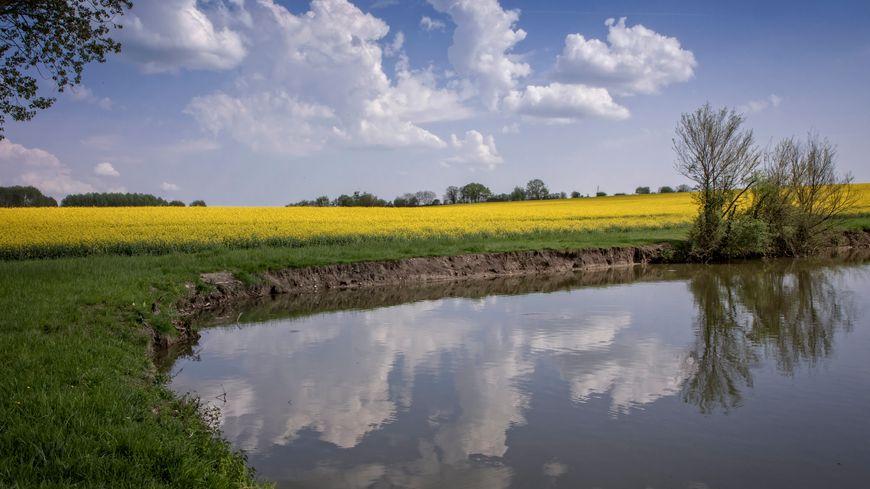 Une retenue d'eau au milieu des cultures de colza (image d'illustration)