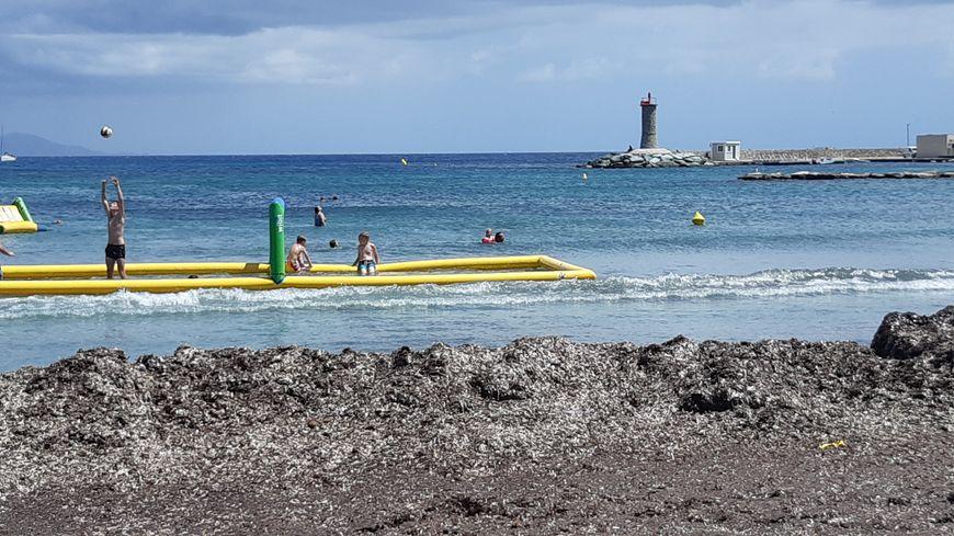 La plage de Macinaggio cerclées par les posidonies.