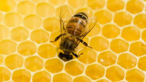 Épisode 3 : Les abeilles, philosophes par nature