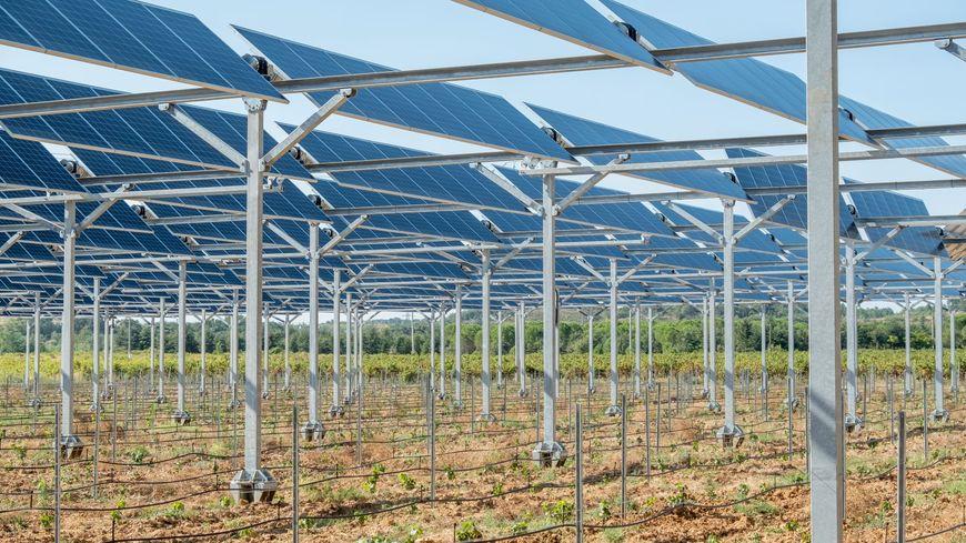 La première centrale agrivoltaïque au monde a été inaugurée à Tresserre dans les P.O, en novembre 2018
