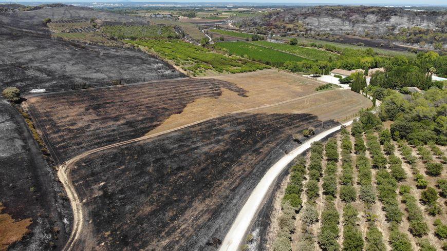Un paysage de désolation après le passage de l'incendie à Générac