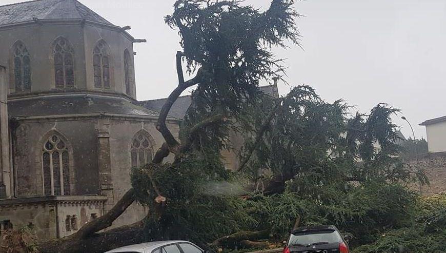Coup de vent en Bretagne : Un arbre centenaire tombe près d'une église de Landerneau