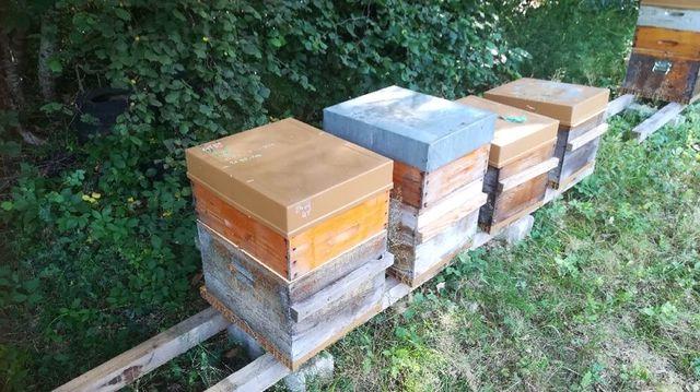 Une partie des ruches a disparu