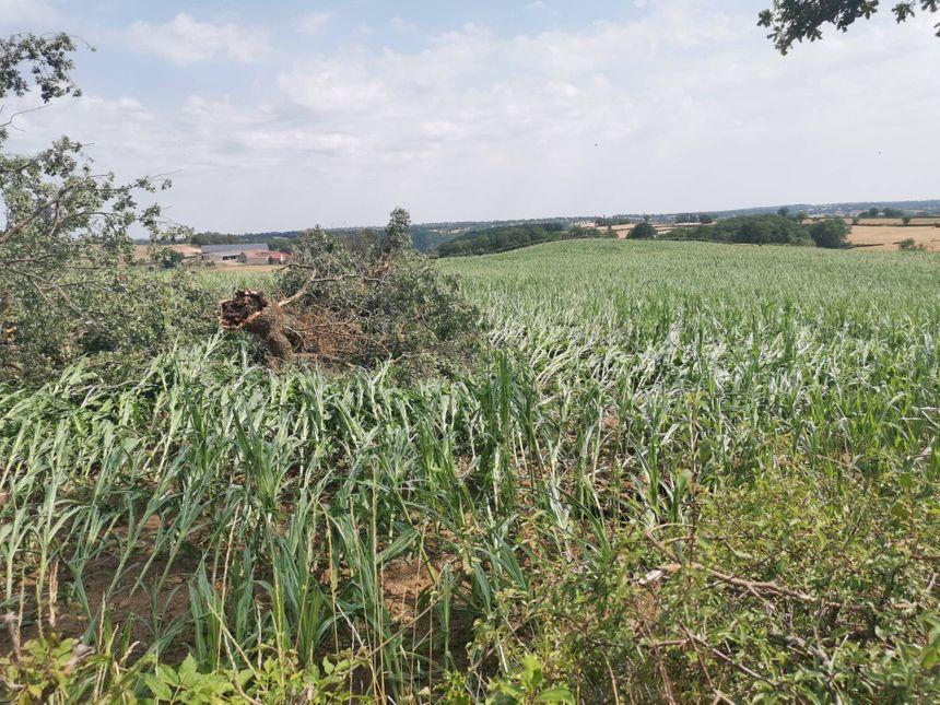 D'autres dégâts dans la végétation à Chambonchard