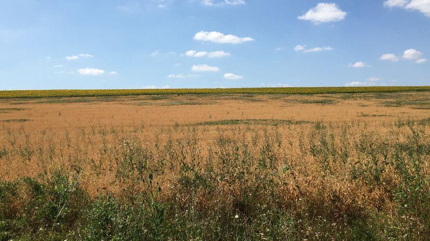 Un champ à Rugney (Vosges). Les agriculteurs sont concernés par l'interdiction de pomper dans les cours d'eau.