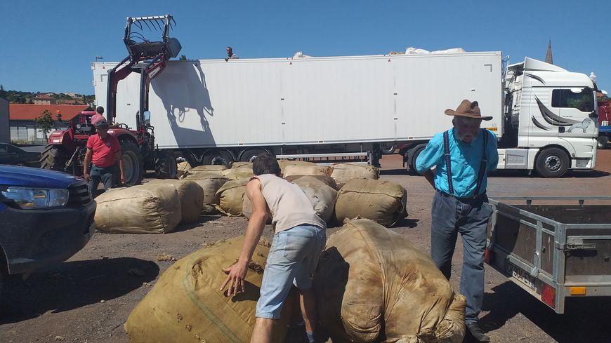 Chaque année, une soixantaine de tonnes de laine est collectée dans la Haute-Loire