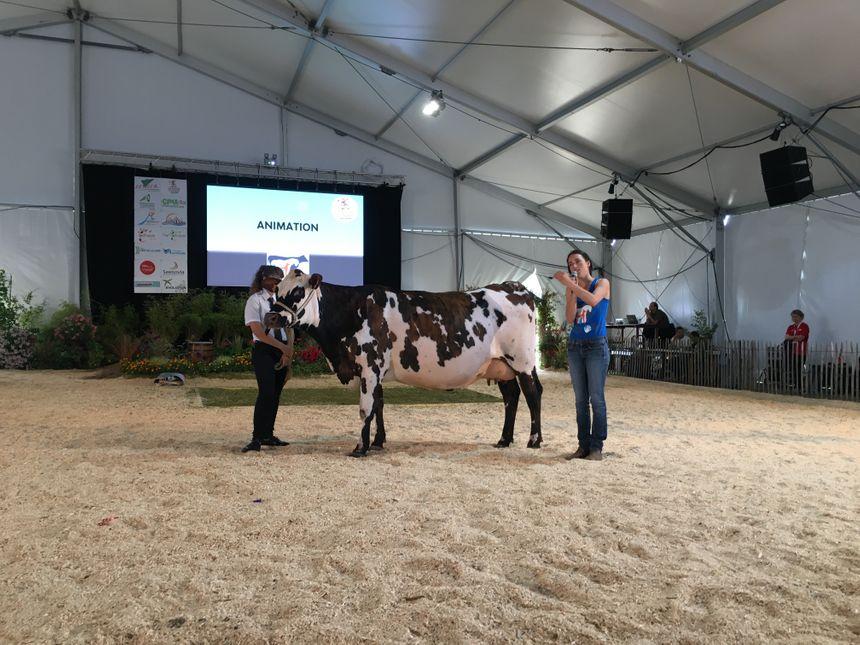 Des animations se sont déroulées durant le concours national comme l'explication de l'ostéopathie bovine.