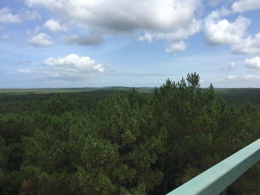 Une fois au sommet, la vue est imprenable sur la forêt de la Coubre.