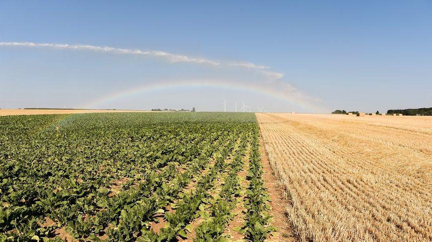 Des champs touchés par la sécheresse irrigués à Guigneville, dans le Loiret.