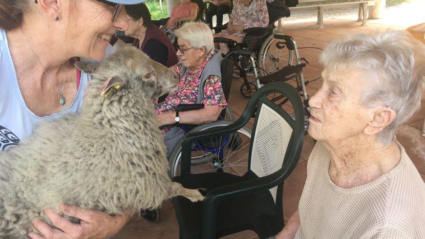 L'éleveuse Carole Plancq présente ses moutons aux résidents.