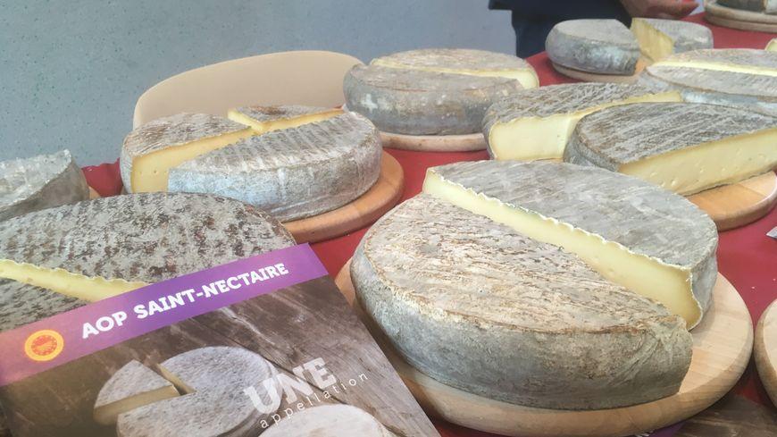 L'AOP Saint-Nectaire regroupe 205 producteurs fermiers et 284 producteurs laitiers