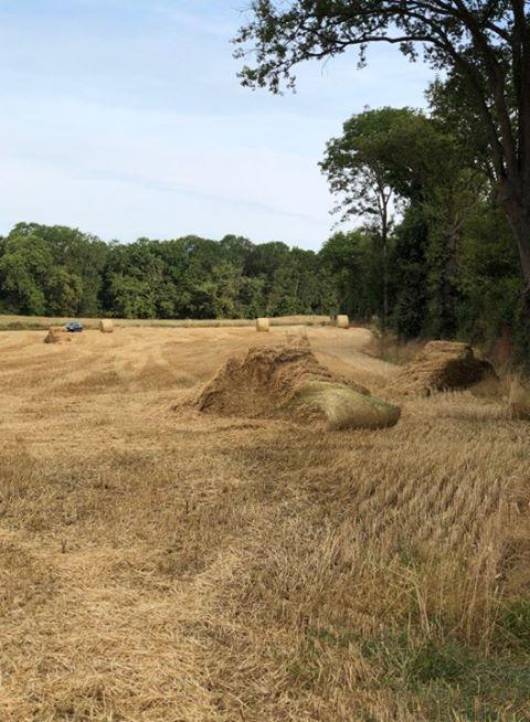 Des bottes de paille bien abîmées dans ce champ près de Guéret