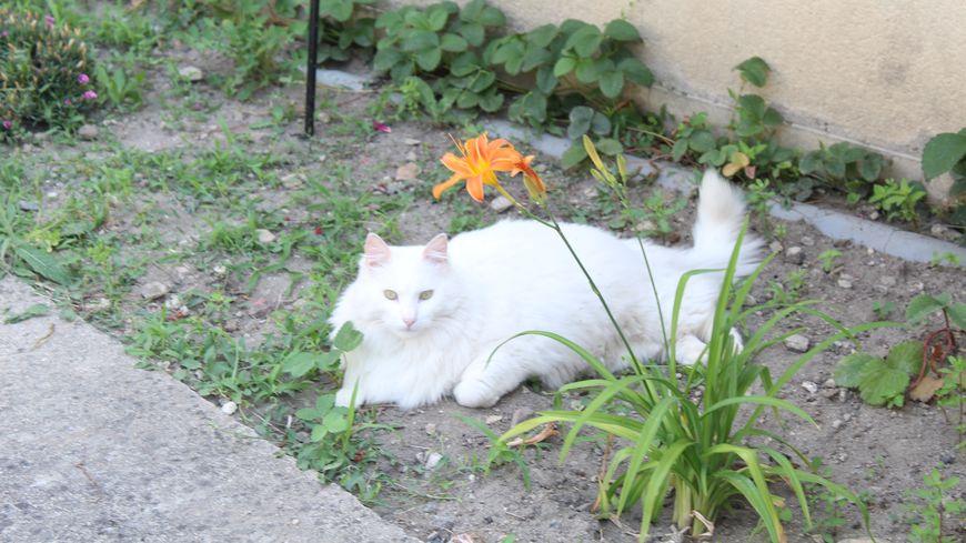 Pompon est un peu le chat de compagnie des résidents de l'Ehpad de Mézières-en-Brenne