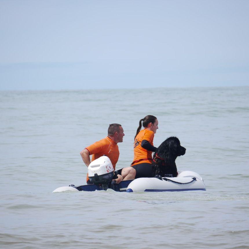 L'exercice le plus difficile à apprendre aux chiens, sauter du bateau à la suite de leur maître