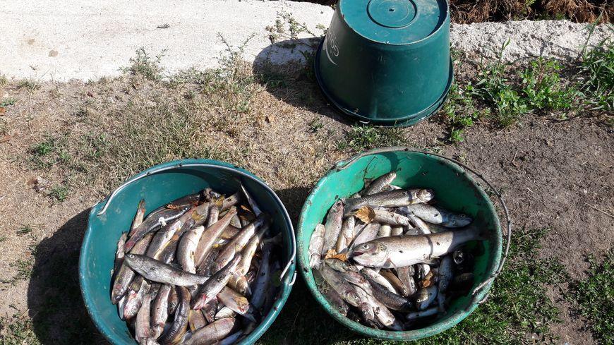 Beaucoup de poissons datant site de rencontres en ligne