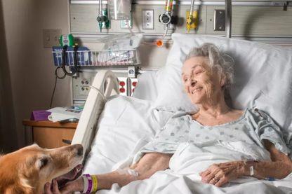 Des animaux pour faciliter la communication dans une unité de soins palliatifs © Getty / Premium access