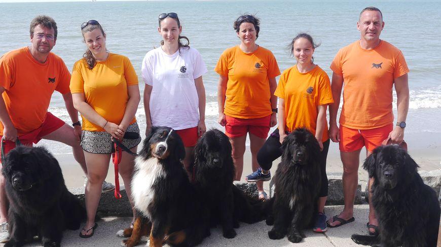 Les bénévoles de l'association Newfie's Normandie s'entraînent chaque semaine sur les plages de Normandie.