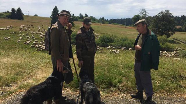 Des bergers alsaciens sur le qui-vive après l'attaque d'un troupeau ce mois-ci.