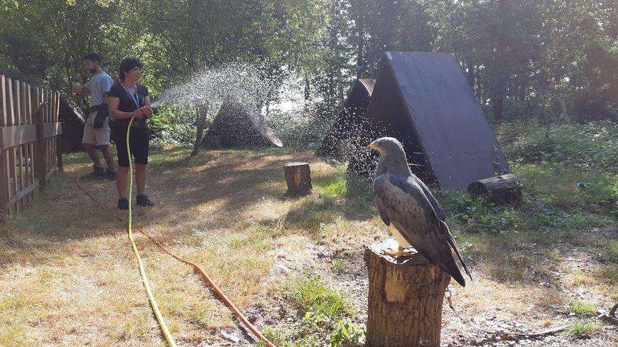 Tornade, l'aigle bleue du Chili, apprécie la douche donnée par Corinne Gratz, l'auxiliaire zoologique