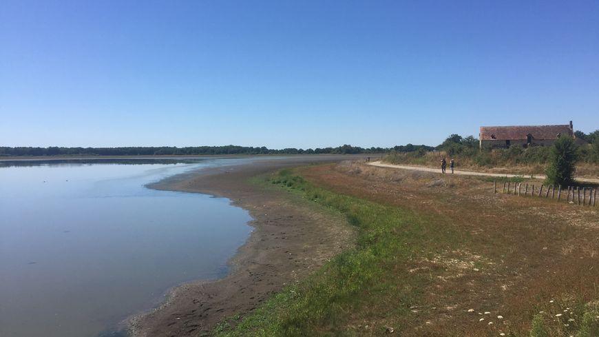 Depuis le bord de l'étang, l'étendu de la sécheresse est flagrante.