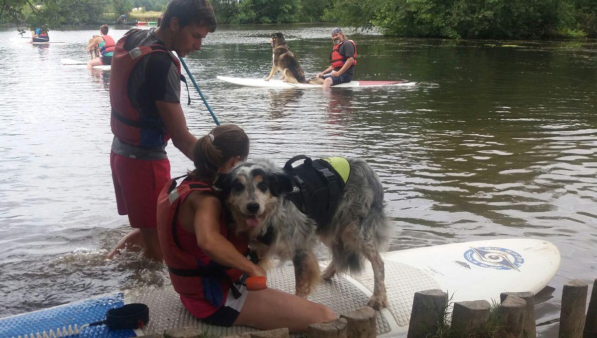 Insolite - Ils font du paddle avec leur chien