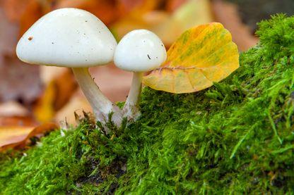 Les champignons dévoilent petit à petit leurs secrets