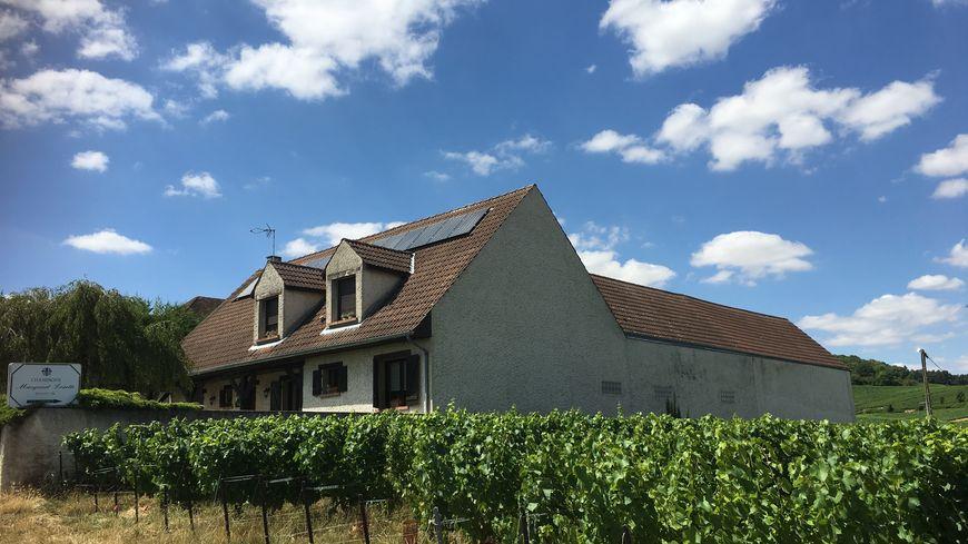 A Ecueil dans la Marne, les parcelles de vignes entourent la commune.