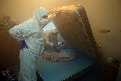 Les punaises de lit, un fléau sanitaire