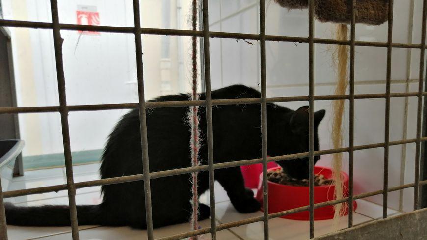 Ce petit chat noir attend patiemment d'être adopté