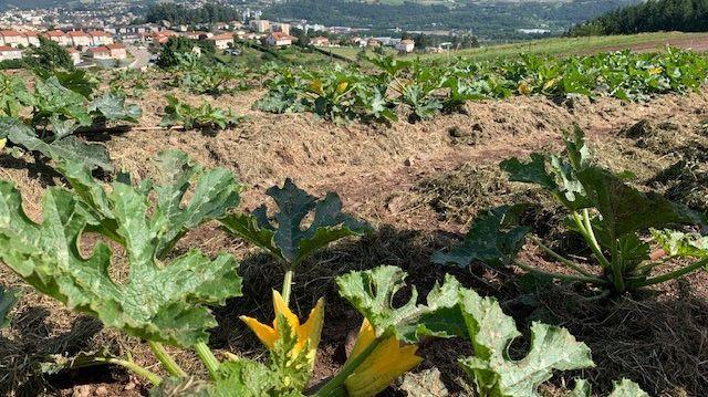 Les premières pousses de la régie agricole municipale de Firminy.
