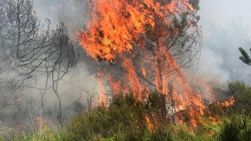 Le feu s'est déclaré en fin de matinée ce 29 juillet au coeur de la forêt de Rennes