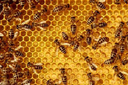 Disparition des abeilles : attention ça va piquer