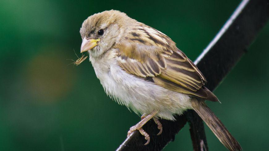 oiseau et moustique