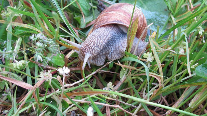 Ur Maligorn = un escargot