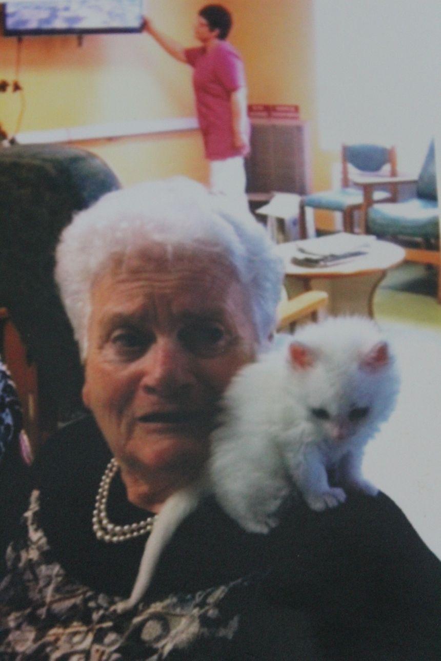 Pompon a été recueilli alors qu'il était encore un chaton