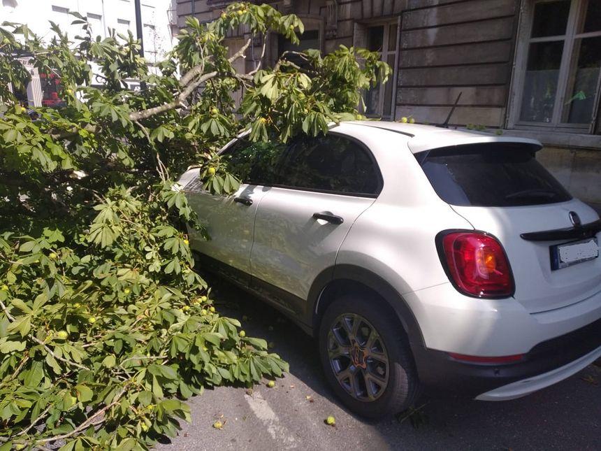 Un arbre s'abat sur une voiture en stationnement à Nantes