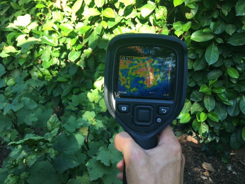 La LPO est équipée d'une caméra thermique pour mieux chercher le hérisson.