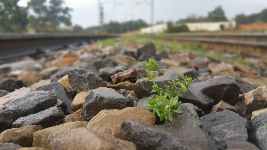 La roche extraite des carrières est utilisée entre autres pour le maintien des voies ferrovières